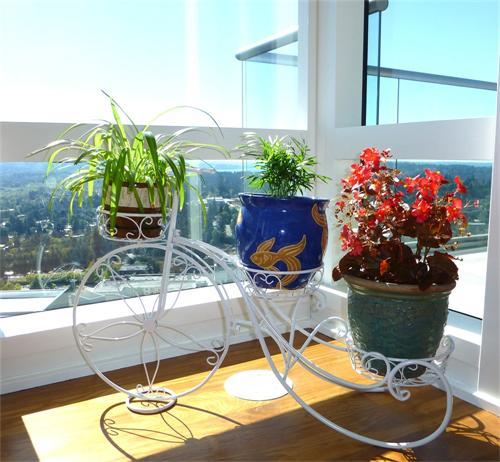 【现货供应】欧式室内铁艺花架